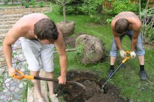 Фото посадки молодых деревьев вишни, soweren.ru
