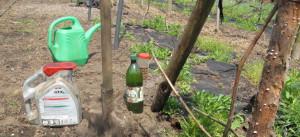 На фото - подкормка винограда осенью, kievgrape.blogspot.com