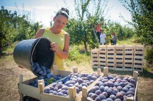 Почему фрукты следует замораживать?