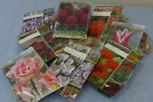 Фото семян луковичных осенних цветов для дачи, liveinternet.ru