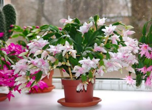 Фото орхидеи на солнечном окне, orhideya-2012.narod.ru