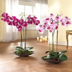 Фото выращивания орхидеи в тепле, sun-lady.ru