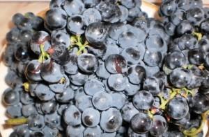 Компот из винограда на зиму – как сделать вкус насыщеннее