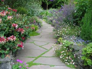 Фото полевых цветов в ландшафтном дизайне дачи, land-designer.diary.ru