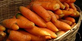 Как хранить морковь в подвале