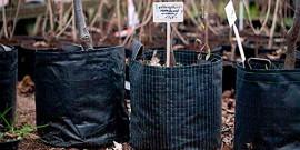 Как сажать вишню осенью – правила опытных садоводов