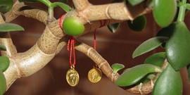 Комнатный цветок толстянка – какой уход любит «денежное дерево»?