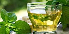 Мята – полезные свойства и противопоказания ароматного растения