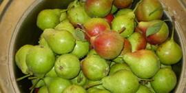 Как сохранить груши на зиму – зимние запасы до нового урожая!