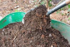 На фото - внесение компоста для клубники после сбора урожая, ogorod.usadbaonline.ru