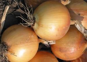 На фото - спелые луковицы лука для хранения зимой, pro-cveti.ru