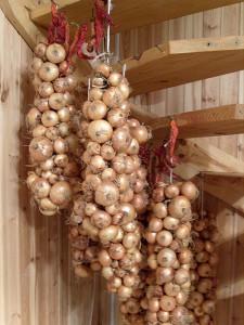 На фото - хранение луковых кос на зиму, lilygold.ru