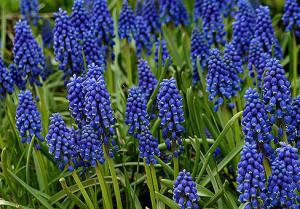 Самые неприхотливые садовые цветы – летние красавцы