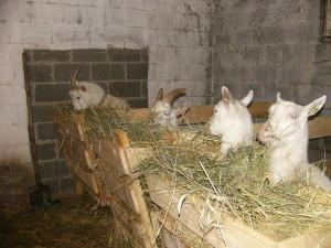 Фото содержания животных на ферме, borona.net
