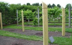 Фото деревянных столбов для шпалер винограда, pcarbonat.ru