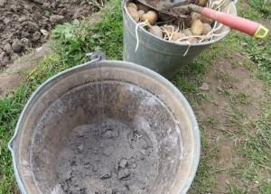 На фото - зола для подкормки картофеля, orchardo.ru