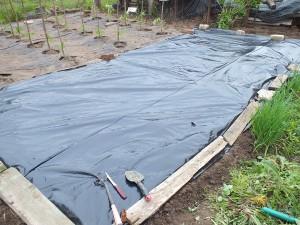 Фото черной пленки для посадки картофеля, liveinternet.ru