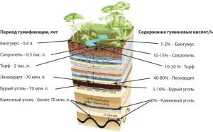 Фото образования гуминовых кислот, agrotechnosouz.com.ua