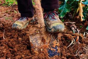 Фото перекапывания сада осенью, good-tips.pro