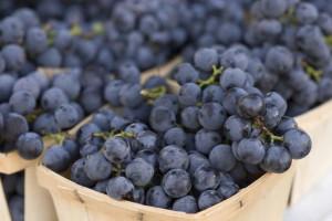 Виноград Изабелла – польза и вред подарка природы фото