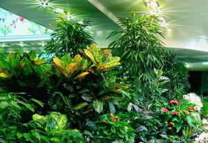 На фото - фитолампы для зимнего сада, 3deko.info