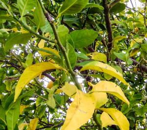 Фото признаков недостатка азота у растений, floweryvale.ru