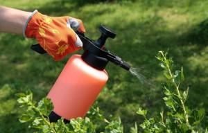 На фото - опрыскивание азотными удобрениями, strgid.ru