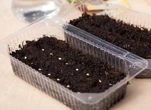 На фото - почва для посадки рассады помидор, parnikiteplicy.ru