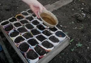 На фото - удобрение мочевиной грунта для рассады помидор, udec.ru