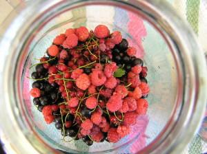 Фото красной и черной смородины с малиной, богатырскаяеда.рф
