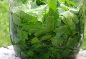 Как использовать листья хрена – способы обработки