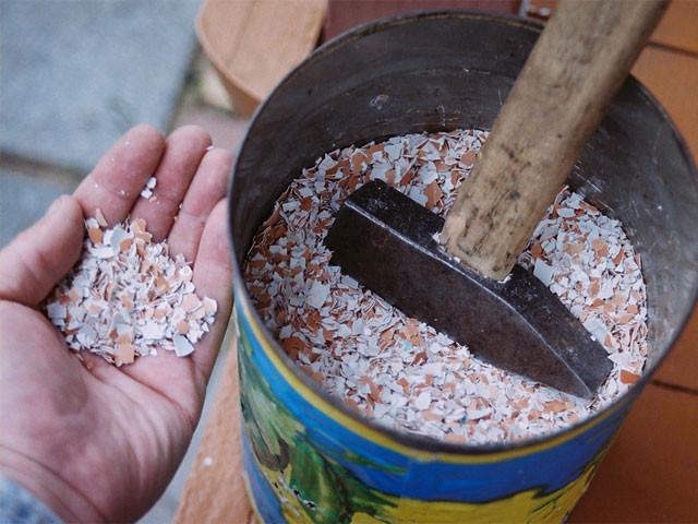 Как сделать удобрение из скорлупы яиц