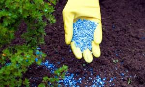 Фото удобрения почвы при посадке малины, jazi.kz