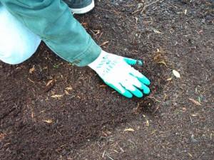Фото подготовки грядки для посадки озимого чеснока, vitbichi.by
