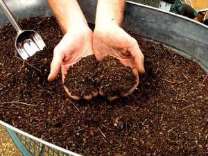 Фото добавления торфа в почву для посадки озимого чеснока, teplica-i-parnik.ru