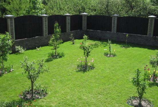 Можно ли сажать плодовые деревья в огороде 63