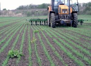 Фото навесной рамы для прополки картофеля, jugagromashimport.com