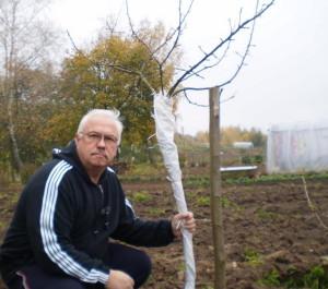 Как укрыть яблони на зиму – опыт поколений садоводов
