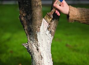 Дополнительные меры для сохранения яблонь