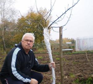 Фото укрытия молодого дерева на зиму, zelensad.com