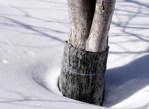 Фото защиты деревьев от грызунов на зиму, supersadovnik.ru