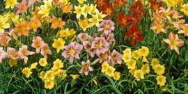 Многолетние цветы для дачи – выбор за вами!