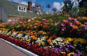 Фото красивых многолетних растений для дачи, 4gazon.ru