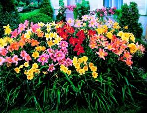 На фото - многолетние долго цветущие садовые цветы, 4gazon.ru