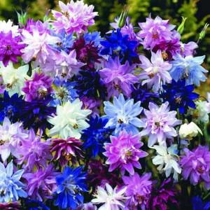 Фото морозоустойчивых многолетних садовых цветов, semenapochta.ru