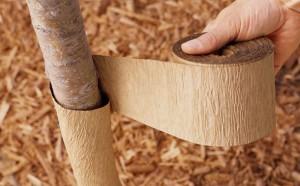 На фото - укрытие ствола вишни теплоизоляционным материалом, homester.com.ua