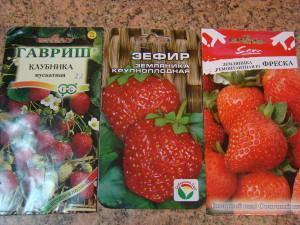 Фото семян клубники для рассады, vseoteplicah.ru
