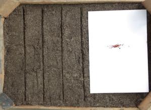 Фото посева семян клубники на рассаду, proklubniku.com