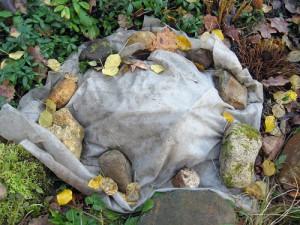 Укрытие хризантем – выращиваем в открытом грунте  фото