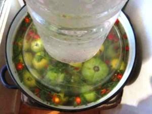 Засол зеленых овощей – приготовление помидор на зиму фото